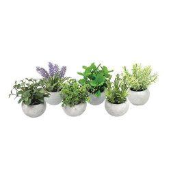 Növénymix, MagicHome, 15-20 cm, 6pcs