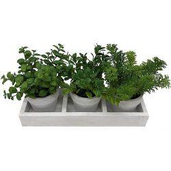 Mix herb succulent, MagicHome, 18 cm, flower pot - paper, 3pcs