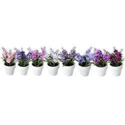 Lavender succulent, Mix MagicHome, 15-20 cm, flowerpot - paper, sellbox, 8pcs