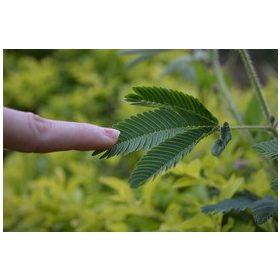 Növénytartás, gondozás