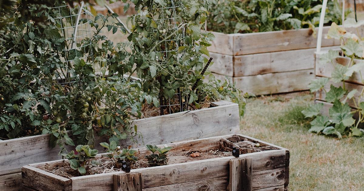 Alapvető eszközök a növénygondozáshoz